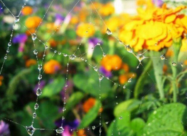 Погода на 17 августа: тепло прогонит дожди на выходных