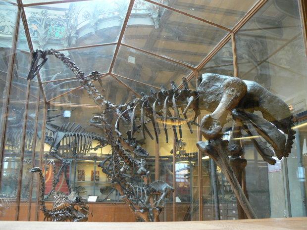 Ученые нашли останки самой крупной птицы на планете: размеры впечатляют