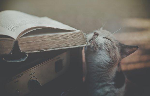 Ходячий испуг: как злюка-котяра стал мировой звездой, невероятно забавные фото