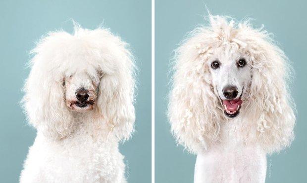 Ці стильні собаки виглядають як поп-зірки вісімдесятих. Їм дуже пощастило з перукарем