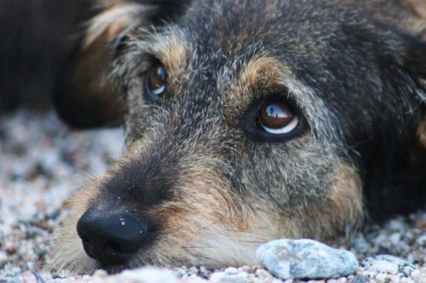 Прокотилися з вітерцем: жителі Якутії по-особливому знущалися над собаками, в хід пішов снігохід