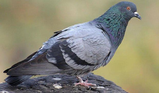 В Івано-Франківську голуб заплутався у дереві