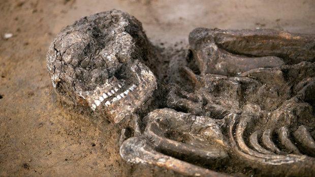 Уникальный древний скелет стоит 2 миллиона евро: чем он особенный