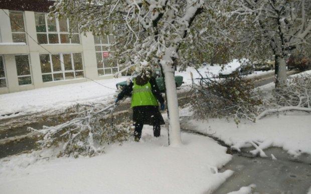 Снігопад повалив тисячі дерев у Харкові: фото