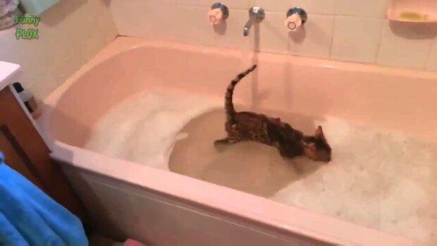 Коти затопили квартиру в Києві, скріншот відео