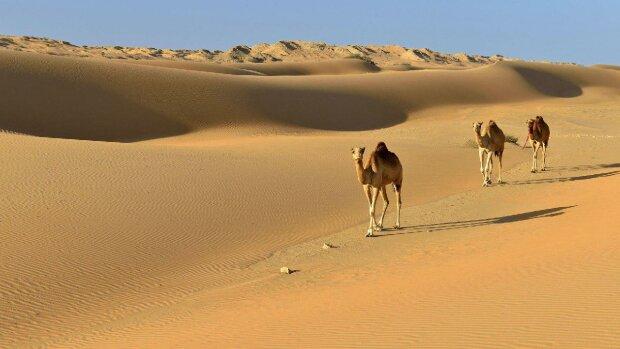 Пустыня, Вести