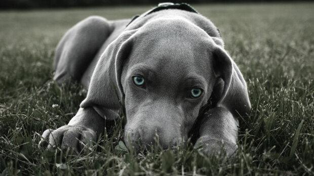 Безносий пес на ім'я Сніффлс шукає сім'ю. Він настільки милий, що неможливо не закохатися
