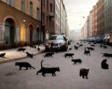 Чорні коти, фото - uCrazy