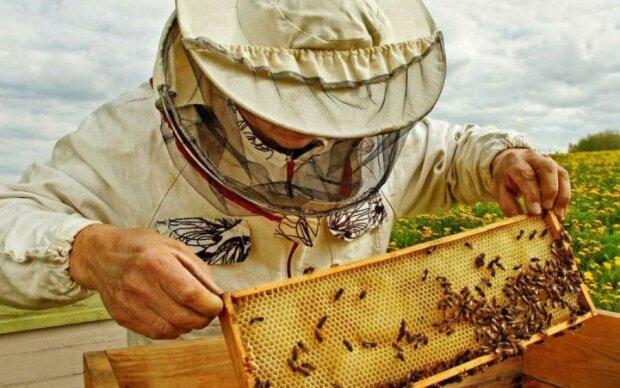 День пасічника України 19 серпня: вражаючі факти про мед