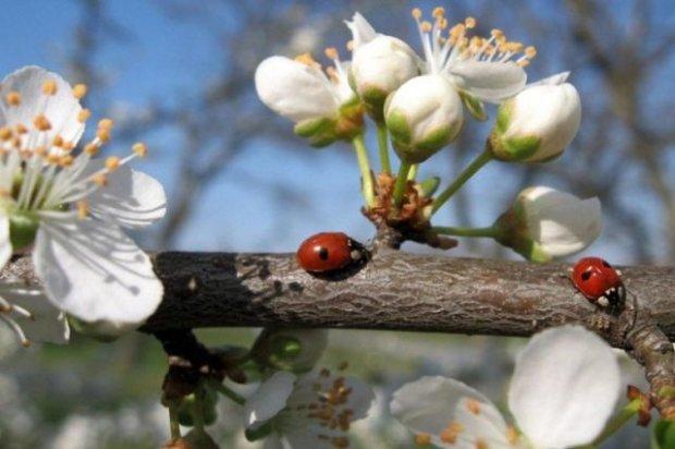 Погода на 23 апреля: наконец-то настоящая весенняя идилия