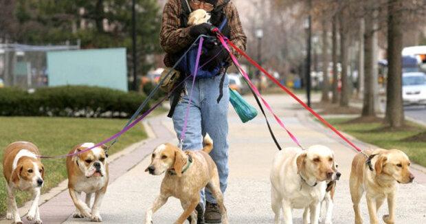 выгул собак, фото: ForumDaily