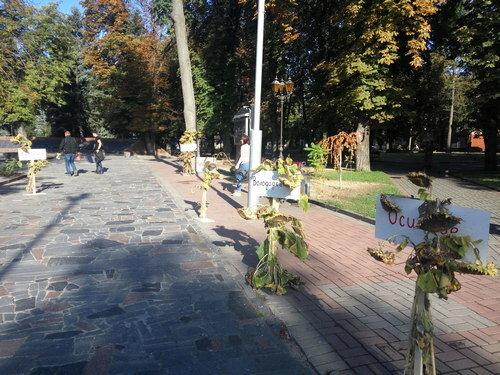 Загинули за нас в Іловайському котлі: у Вінниці пам'ять героїв вшанували алеєю з соняхів
