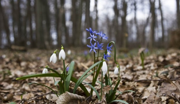Погода на 28 февраля: зима удивит прощальным подарком