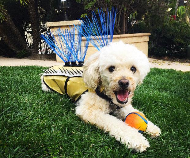 Собаки-панки: американка придумала захисні костюми для домашніх тварин, задум підкорив соцмережі