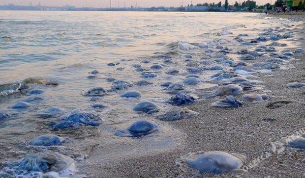 Пляжи Одессы заполонили чудовищные медузы (фото)