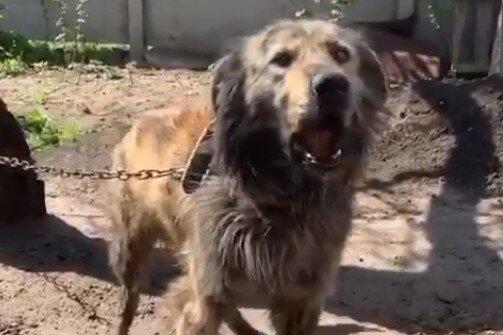 собака, скріншот з відео
