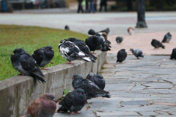 Винничане, без зонтиков - ни шагу: осень подмочит репутацию 4 сентября
