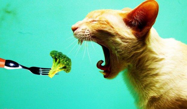 Коты перенимают моду на вегетарианство