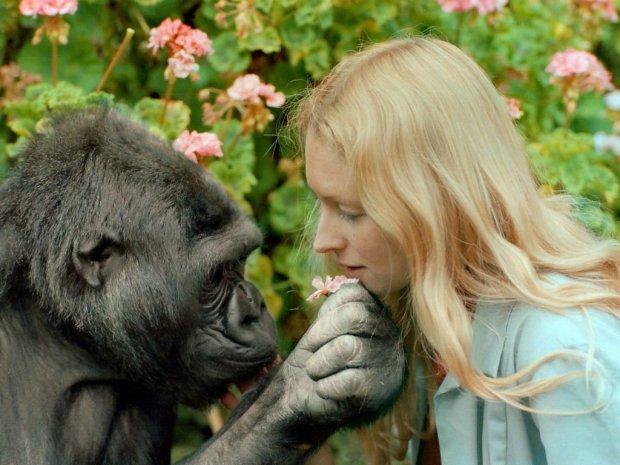 Дружба с Робином Уильямсом, воспитание котенка и послание человечеству: история самой умной в мире обезьяны Коко