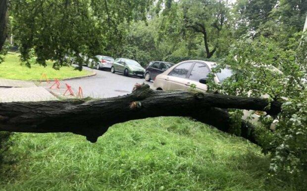 Нещадна стихія розходилась не на жарт - дерево впало і вбило дитину
