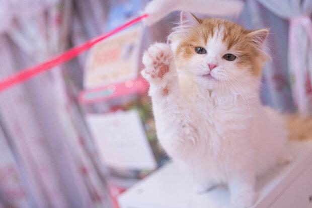 котенок, фото Pxhere