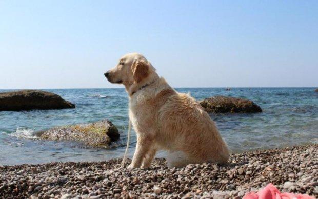 """Забавная собака """"навела порядок"""" на одесском пляже: видео"""