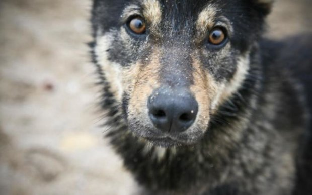 Запорожье шокировали живодеры, лишившие собаку лап