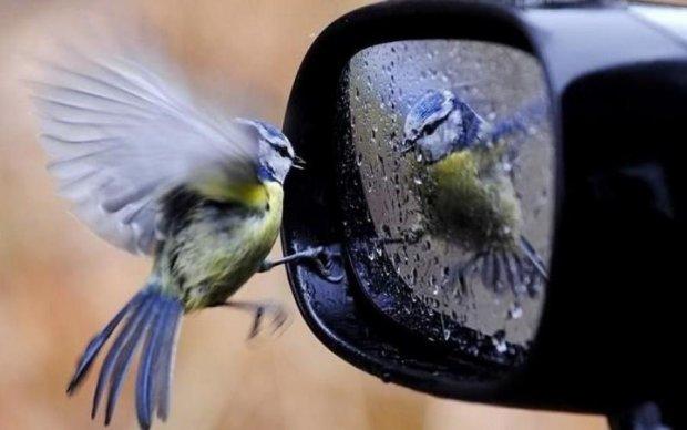 Як людяність вплинула на мутацію птахів