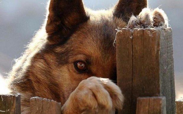 Заботливый щенок покорил соцсети: фото
