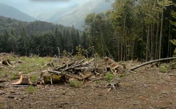 """У Франківську оголосили полювання за """"чорними лісорубами"""""""