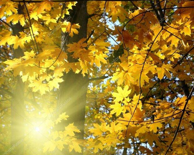 Погода на 19 жовтня: Україна засяє на сонці