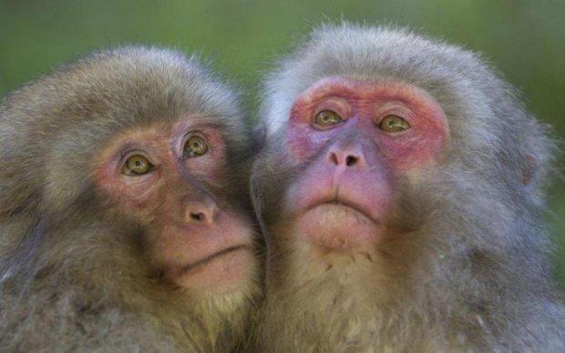 Ученые обнаружили новые способности мозга у приматов