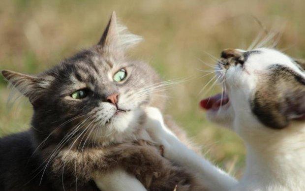 """Профі без мандата: """"курси мордобою"""" від котів-політиків"""