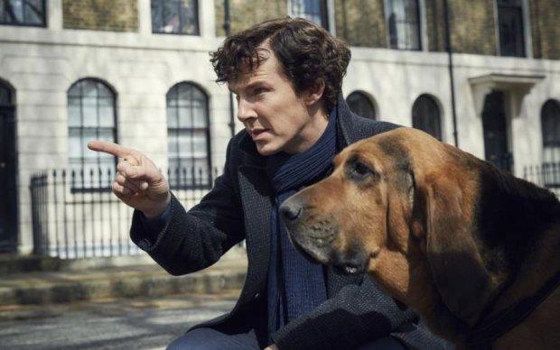 За господаря – порве: як обрати вірного пса за гороскопом