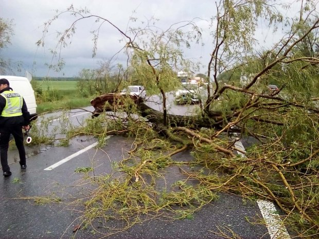 """""""Вулиці потопають, дерева вирвало з корінням"""": опубліковано фото постраждалого від смерчу Житомира"""