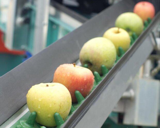 """Секрет в яйце - ученые создали """"съедобный"""" раствор, который не позволяет фруктам портиться"""