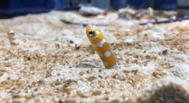 Не будь черствым, помоги одиноким угрям - днепряне позвонили по видеочату в японский океанариум