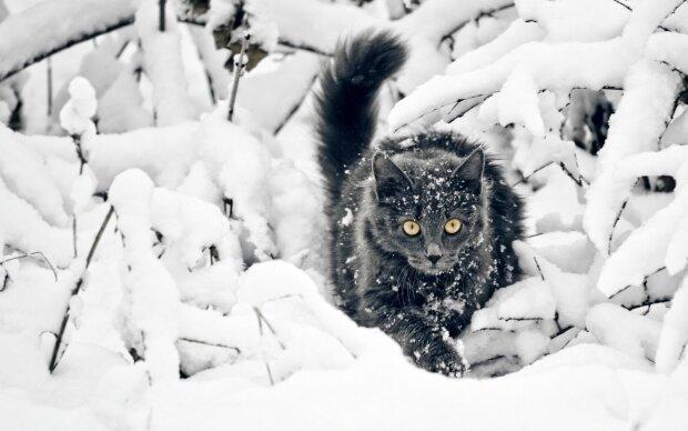 """""""Коти-мокрушники"""" масово вбивають дітей, вінницька трагедія повторилася в Росії: стережіться пухнастиків"""