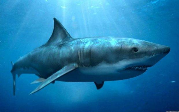 Акула-прибулець потрапила в об'єктив камери