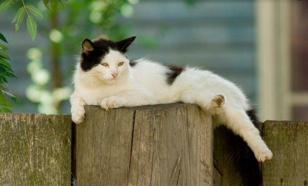 Ленивый котик фото pixabay