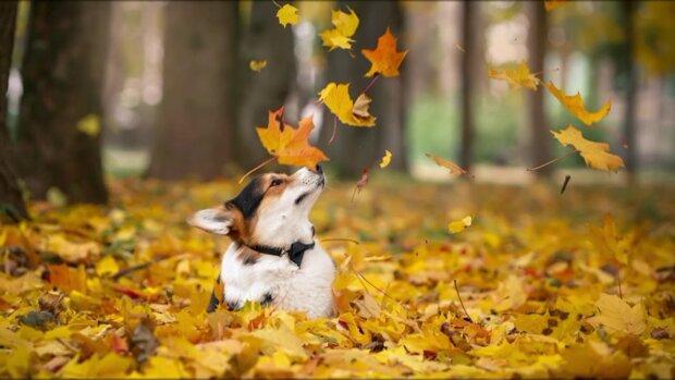 Осінь потішить одеситів перед холодами: яким буде початок тижня 28 жовтня