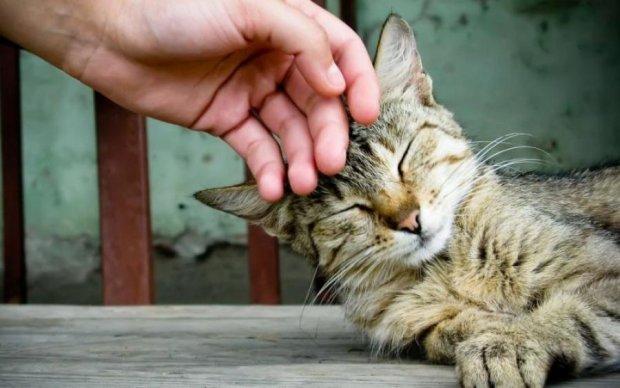 Любите кошек? Приходите их гладить! В Киеве открыли чудесную вакансию