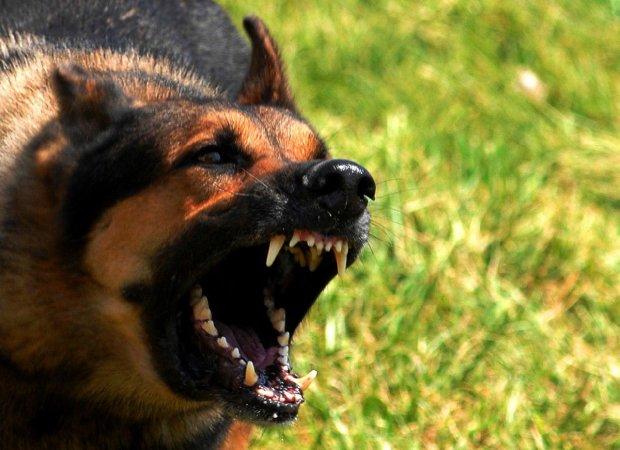 В Николаеве стая злых собак оккупировала территорию детсада: страшное видео