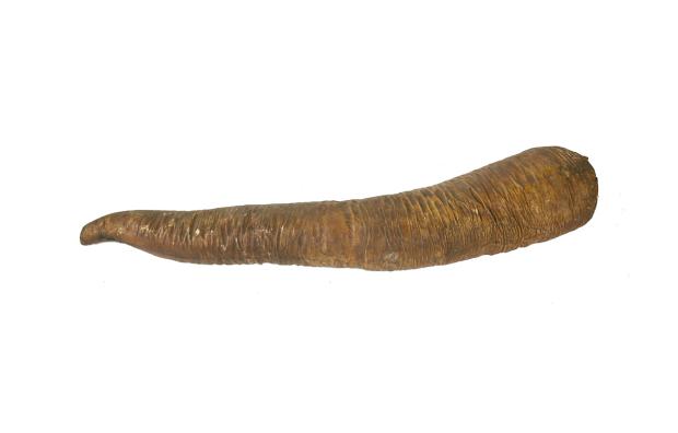 Твердое предложение: на британском аукционе продали гигантский окаменевший пенис