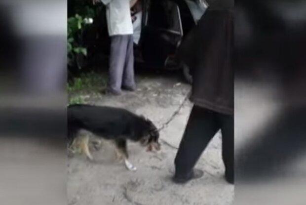 Живодеры поиздевались над собакой из-за убитых птиц – на Хмельниччине пенсионеров обвиняют в жестокости