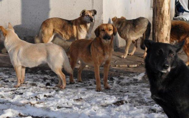 Собаки разорвали на куски: последние минуты жизни парня показали на видео