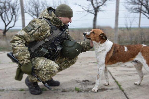 Собака на службі, прес-служба ООС