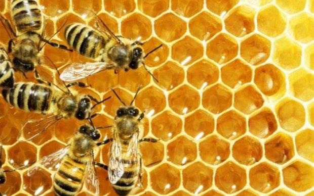 Зосима Пчельник 30 апреля: чего категорически нельзя делать в этот день