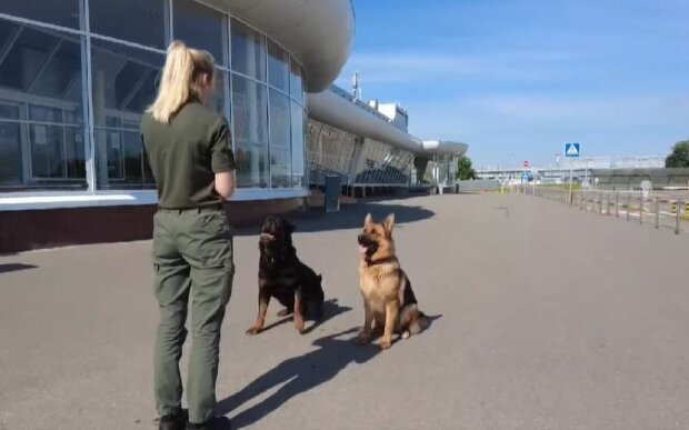Кинолог с собаками, скриншот: Facebook