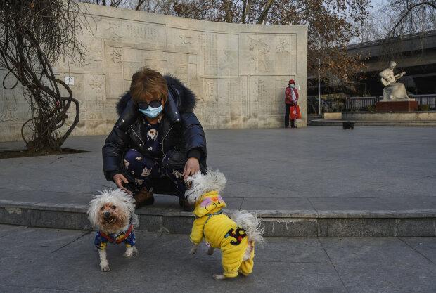 Коронавирус и собаки, фото: gettyimages